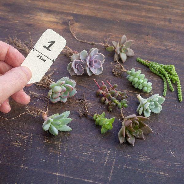Наборы растений. Аналогичные тем, что на фото.